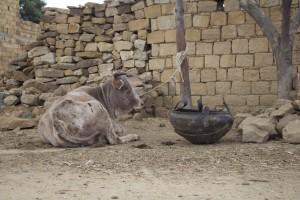 Adigrat - rural life