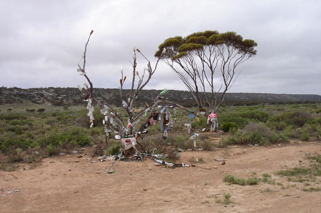 Strange Trees in the Nullarbor