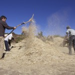 Zi'kallay - Sifting Chaff from the Wheat