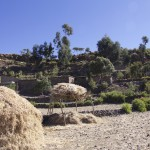 Zi'kallay - Keeping Cereals safe from the Cows