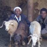 Zik'allay - People and Farm Animals