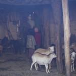 Zik'allay - Farmhouse