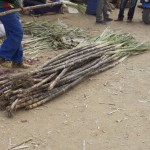 At the Market - Sugar Cane
