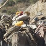 Another Salt Caravan from the Danakil